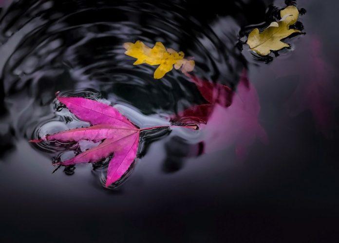 reason season lifetime, poem, mindset, wildone forever,