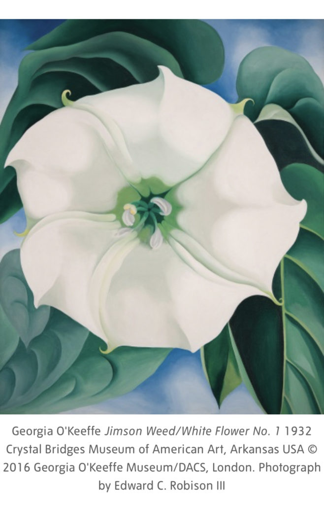 white Flower No 1