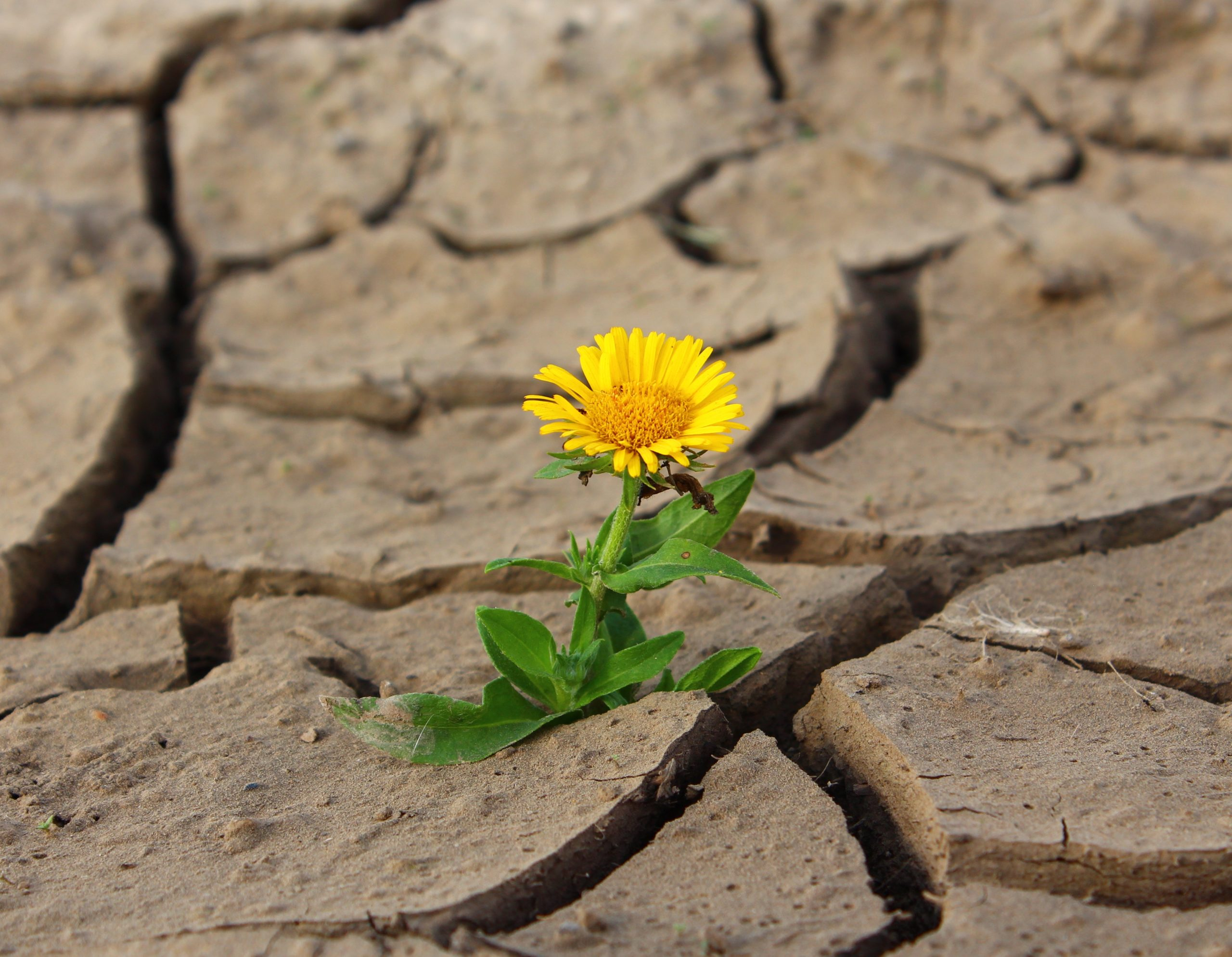 Regaining Power, self-help, empowerment, WildOne Forever