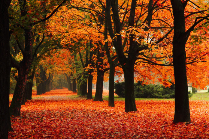 wildoneforever.com, wildoneforever, wildone forever, What does the Autumn Equinox Mean in 2020?, Expressions, Lifestyle, Motivational Moments