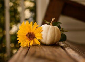 health, wellness, fitness, thankful, Thanksgiving 2020, Meredith Loughran, merej99, WildOne Forever, journal